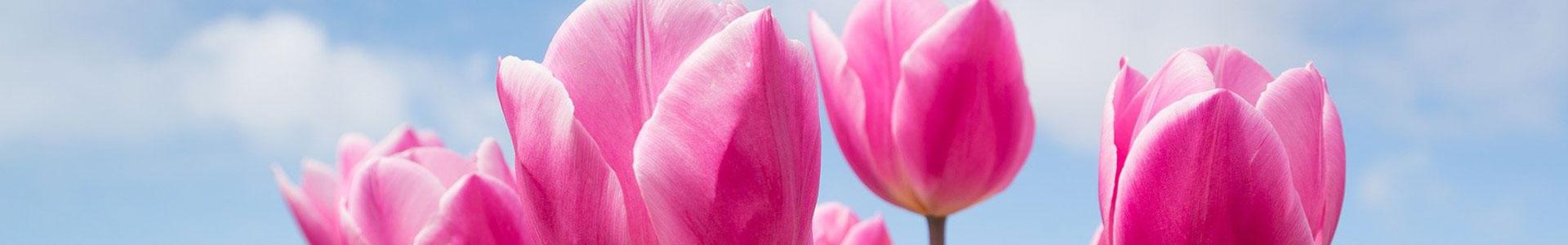 image-générique-printemps